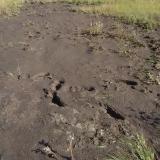 Det blir snabbt en hel del muddringsmassor, men det sjunker ihop rejält när de torkar.